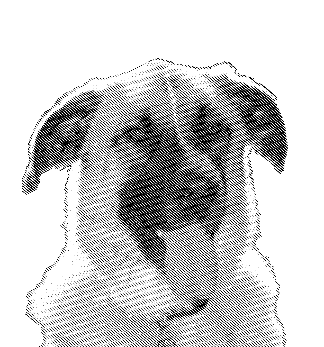 BodhiHalftone.png