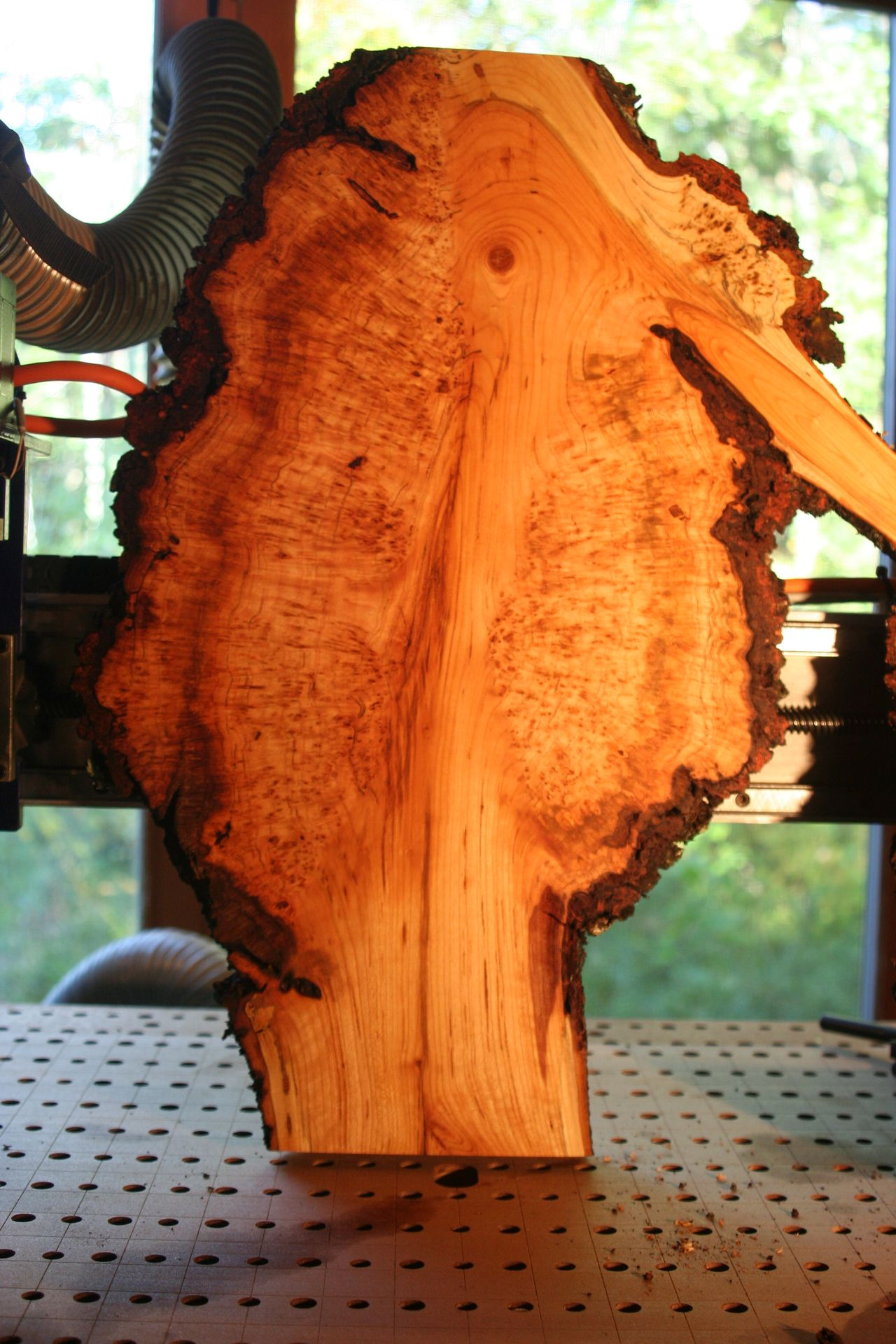 9.29.18 BRIAN PIN CHERRY BURL 1 INCH A SIDE.jpg