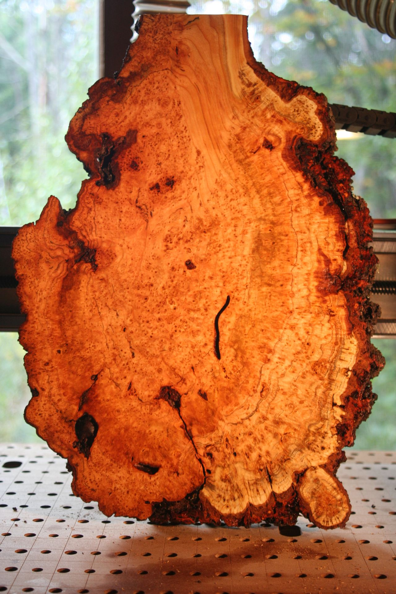 9.30.18 PIN CHERRY BURL TREE SIDE STOP.jpg